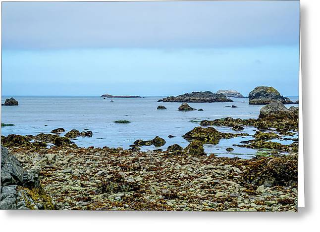 Shoreline Greeting Card by Ric Schafer