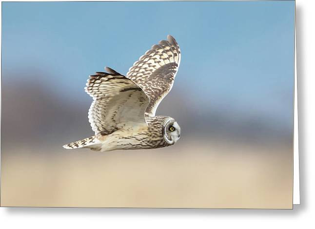 Greeting Card featuring the photograph Short-eared Owl In Flight by Angie Vogel