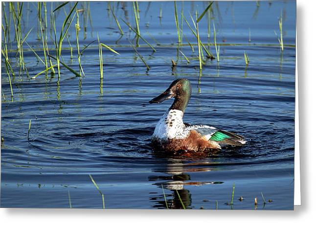 Greeting Card featuring the photograph Shoveler by Jean Noren