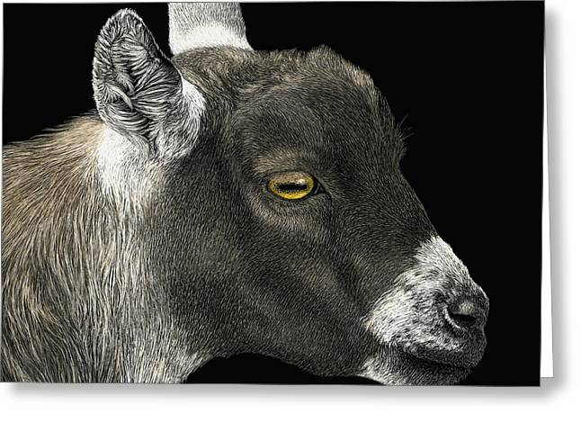 Show Goat Greeting Card