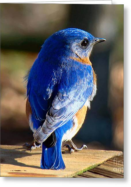 Showing Off My Beautiful Blue Feathers In The Sunlight Greeting Card
