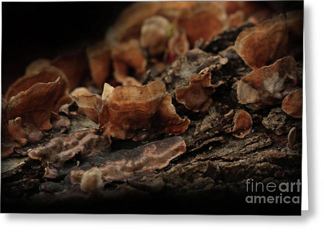 Greeting Card featuring the photograph Shrooms by Kim Henderson