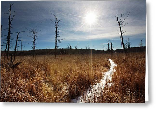 Greeting Card featuring the photograph Shrub Swamp by Sue Collura