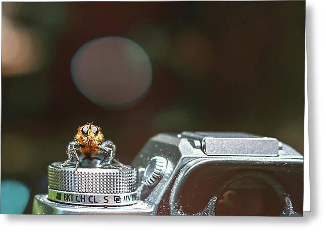 Greeting Card featuring the photograph Shutterbug- by JD Mims