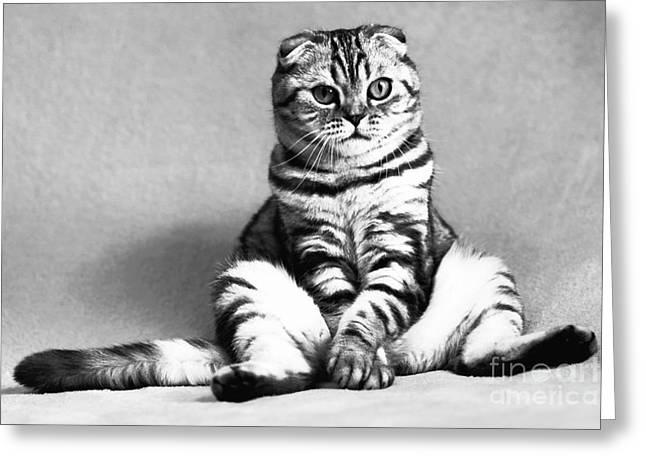 Shy Cat Greeting Card