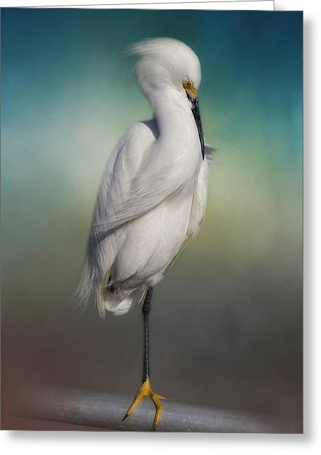 Shy Egret Greeting Card by Kim Hojnacki