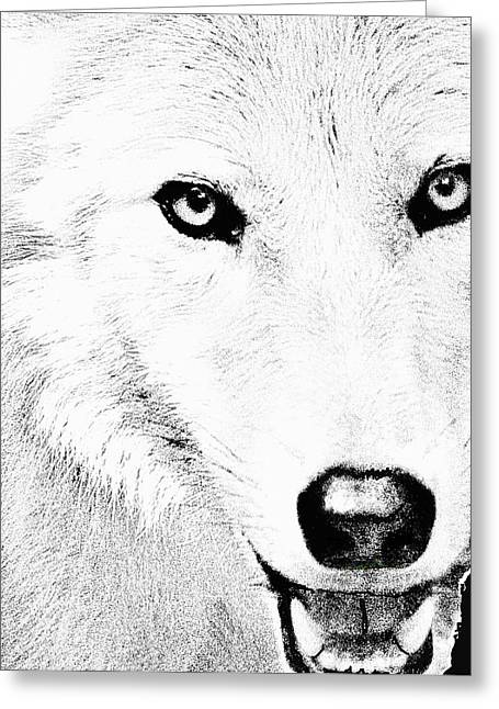 Wolf From The Forest Greeting Cards - Shy Wolf Greeting Card by Debra     Vatalaro