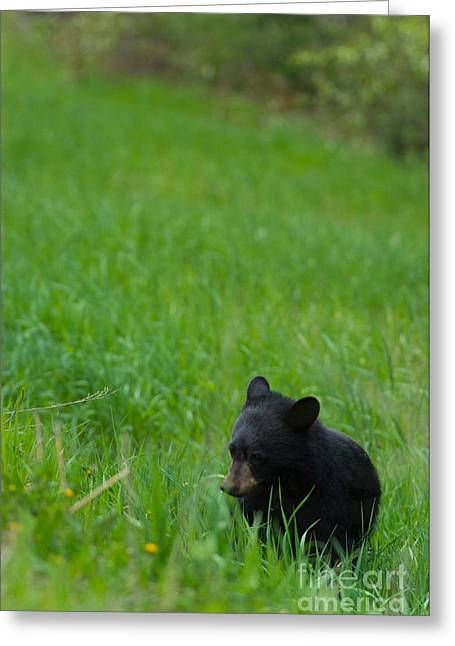 Shyness Greeting Card by Birches Photography