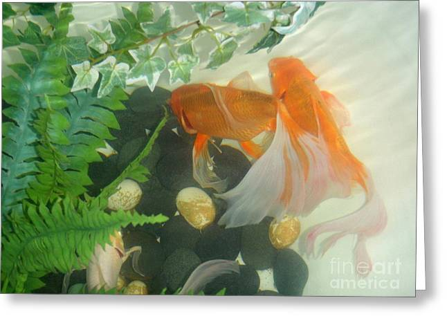 Siamese Fighting Fish 2 Greeting Card by Mary Deal