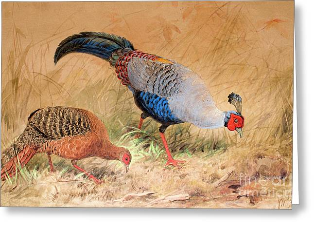 Siamese Pheasant  Greeting Card