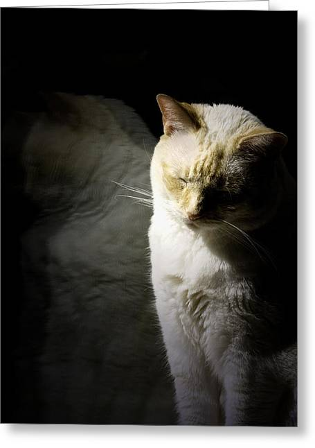 Colourpoint Greeting Cards - Siamese Reflection Greeting Card by Wendy White