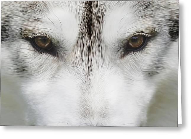 Siberian Husky Portrait 2 Greeting Card
