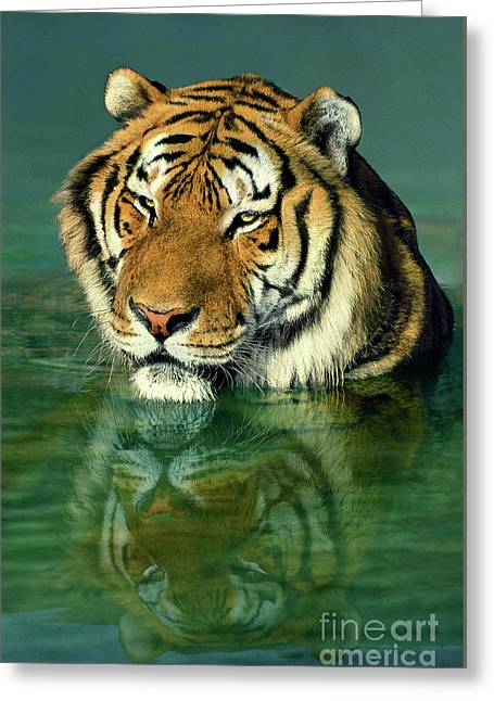 Siberian Tiger Reflection Wildlife Rescue Greeting Card by Dave Welling