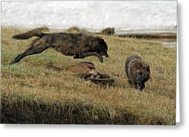 Sibling Rivalry Greeting Card by Sandy Sisti
