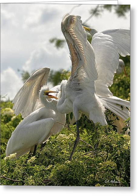 Sibling Squabble Greeting Card by Christopher Holmes