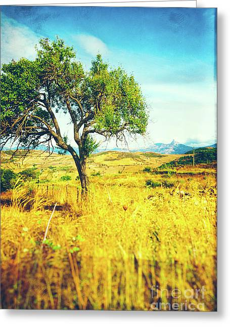 Greeting Card featuring the photograph Sicilian Landscape With Tree by Silvia Ganora