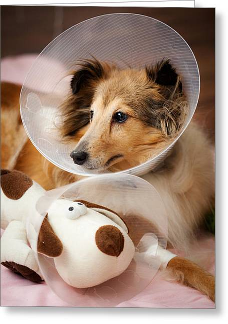 Doggie Photographs Greeting Cards - Sick buddies Greeting Card by Kati Molin