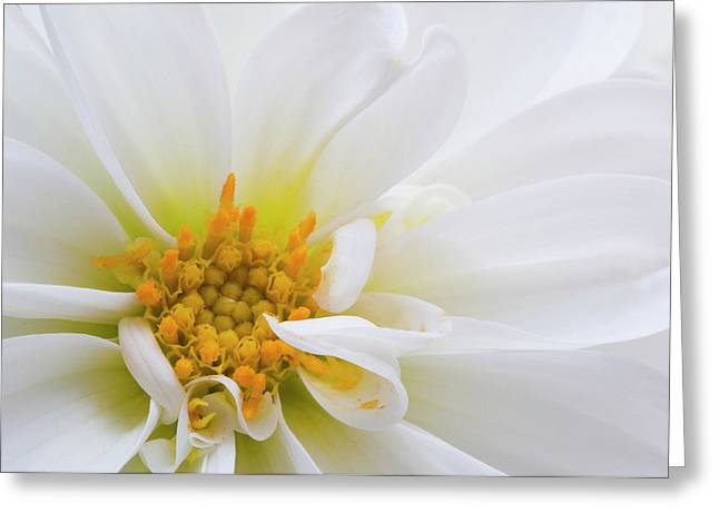 Side Dahlia Greeting Card