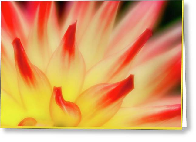Greeting Card featuring the photograph Side View by Greg Nyquist