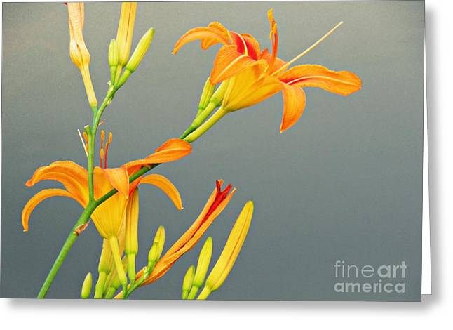 Sidewalk Lilies Greeting Card by Sarah Loft