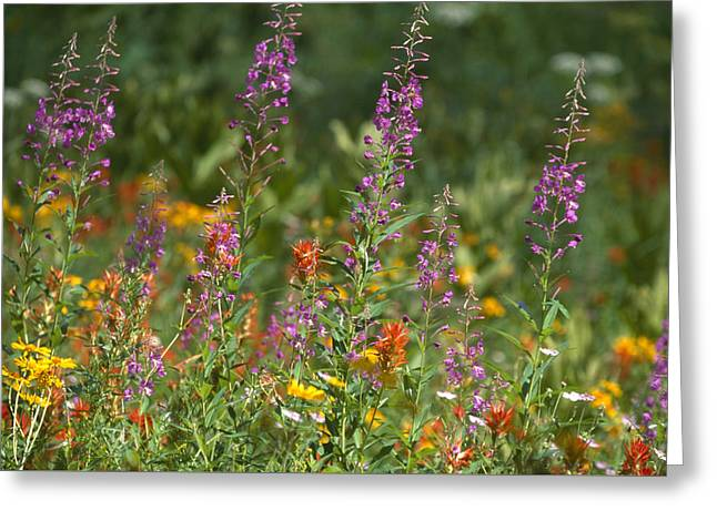 Sierra Bouquet Greeting Card by Soli Deo Gloria Wilderness And Wildlife Photography