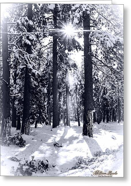Sierra Forest Show Greeting Card by William Havle
