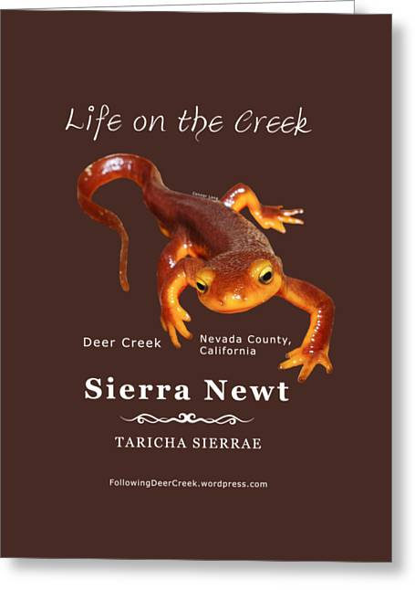 Sierra Newt - Color Newt - White Text Greeting Card