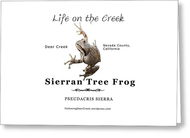 Sierran Tree Frog - Photo Frog, Black Text Greeting Card