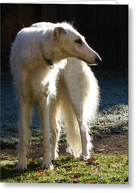 Greeting Card featuring the photograph Sighthound by Deborah Johnson