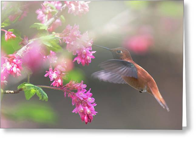 Sign Of Spring 2 Greeting Card by Randy Hall