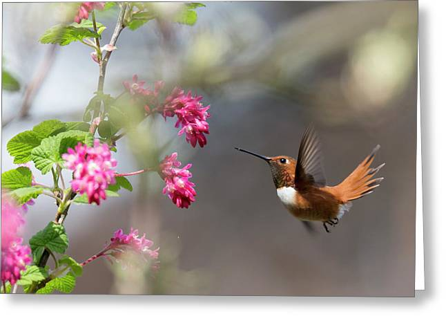 Sign Of Spring 3 Greeting Card by Randy Hall