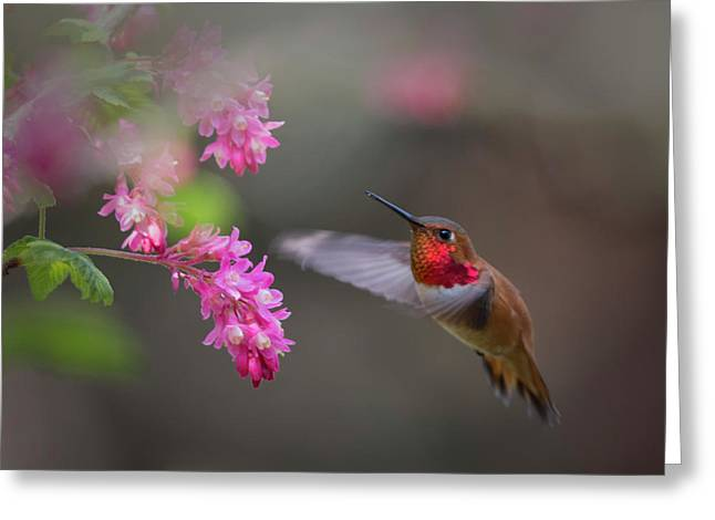 Sign Of Spring Greeting Card by Randy Hall