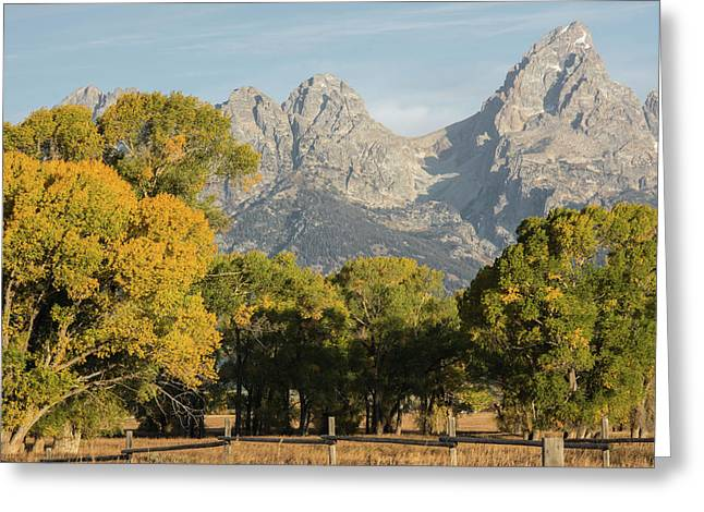 Greeting Card featuring the photograph Signs Of Autum by Colleen Coccia