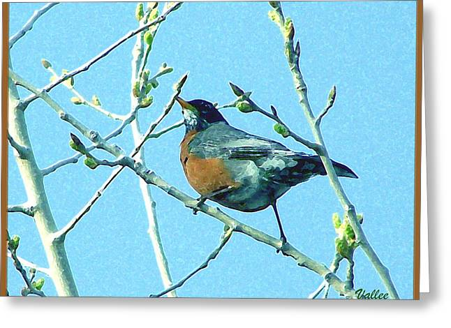 Signs Of Spring Greeting Card by Vallee Johnson