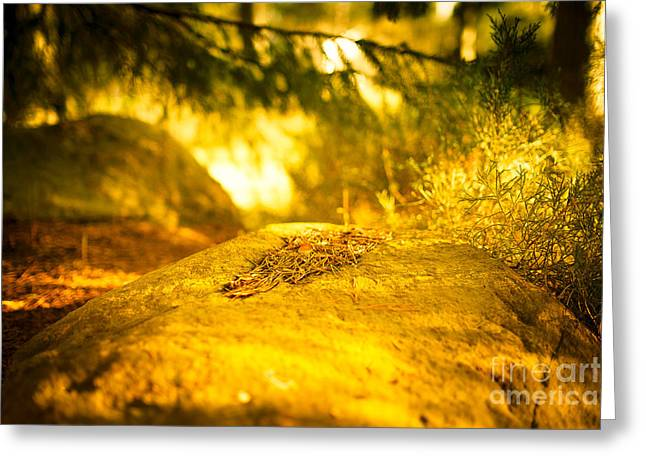 Silence And Peace Under The Spruce Trees Greeting Card