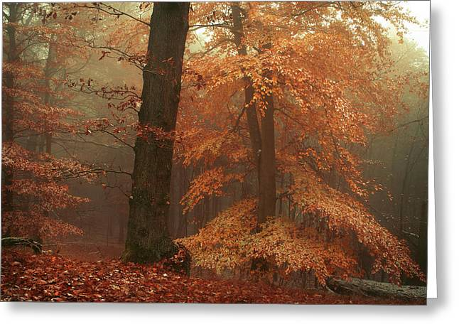 Silence In Misty Woods Greeting Card by Jenny Rainbow