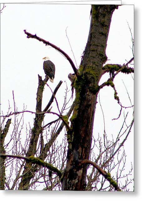 Silent Guardian Greeting Card by Nick Gustafson