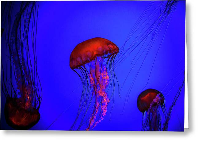 Greeting Card featuring the photograph Silent Jellies by Jeff Folger