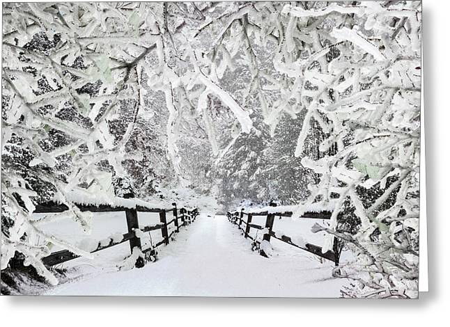 Silent Path In The Snow Greeting Card by Debra and Dave Vanderlaan