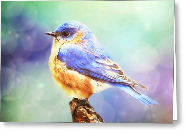 Silent Reverie Greeting Card by Tina LeCour