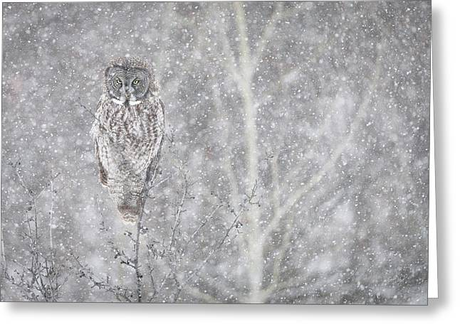 Greeting Card featuring the photograph Silent Snowfall Landscape by Everet Regal
