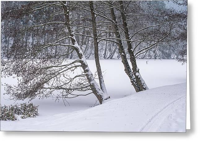 Silent Winter Morning Greeting Card