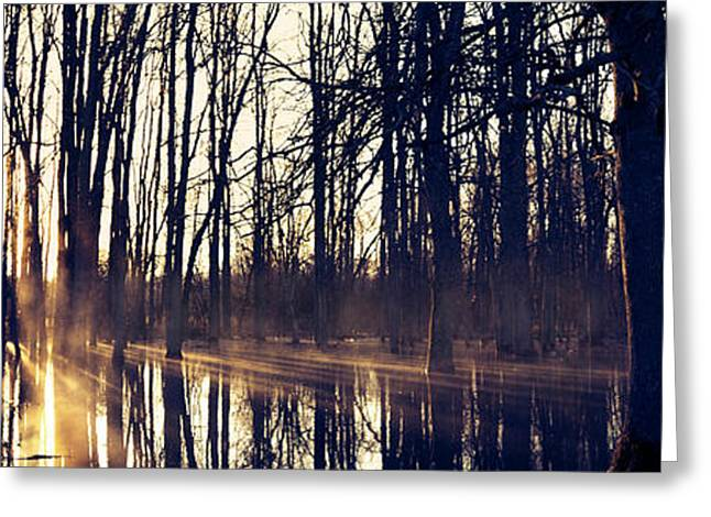 Silent Woods #4 Greeting Card