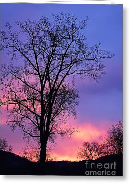 Greeting Card featuring the photograph Silhouette At Dawn by Larry Ricker