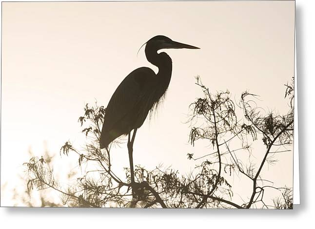 Silhouette In The Sunset Greeting Card