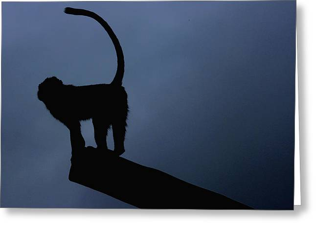 Silhouette Greeting Card by Martin Newman