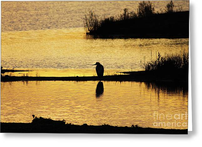 Silhouette Of A Grey Or Gray Heron - Ardea Cinerea - In Wetland We Greeting Card