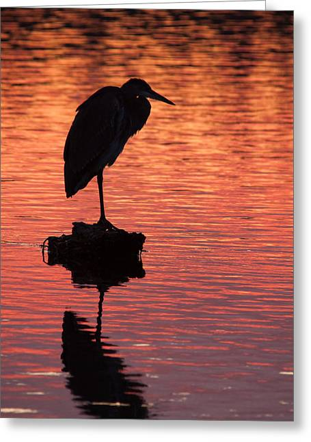 Silhouette Of A Heron Greeting Card by Matt Dobson