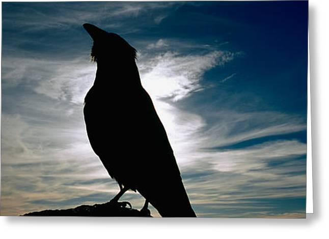 Silhouette Of A Raven At Dusk Greeting Card by Panoramic Images