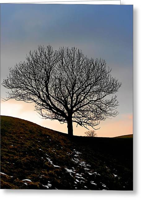 Winter Landscapes Greeting Cards - Silhouette of a tree on a winter day Greeting Card by Christine Till